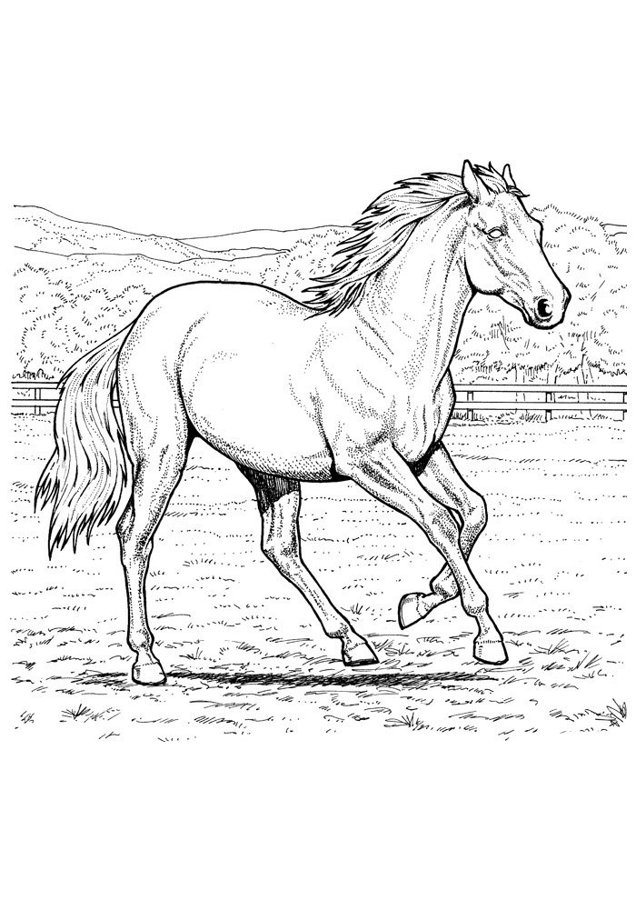 Horse coloring page 36