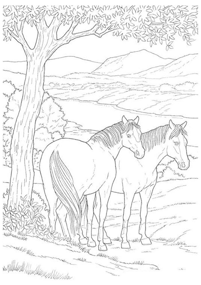 Horse coloring page 40