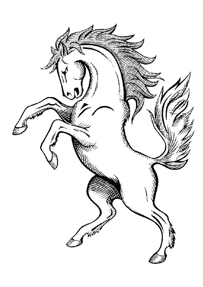 Horse coloring page 41