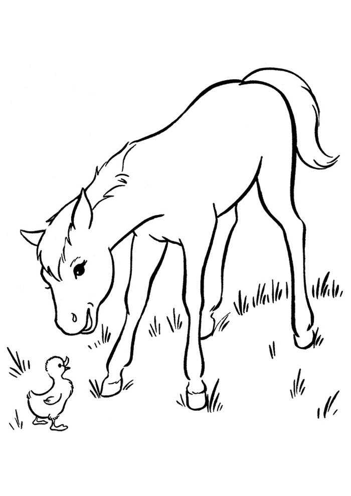 Horse coloring page 53