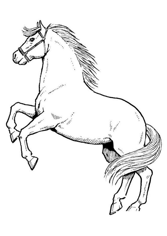 Horse coloring page 58