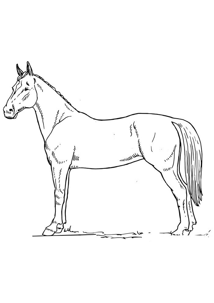 Horse coloring page 63