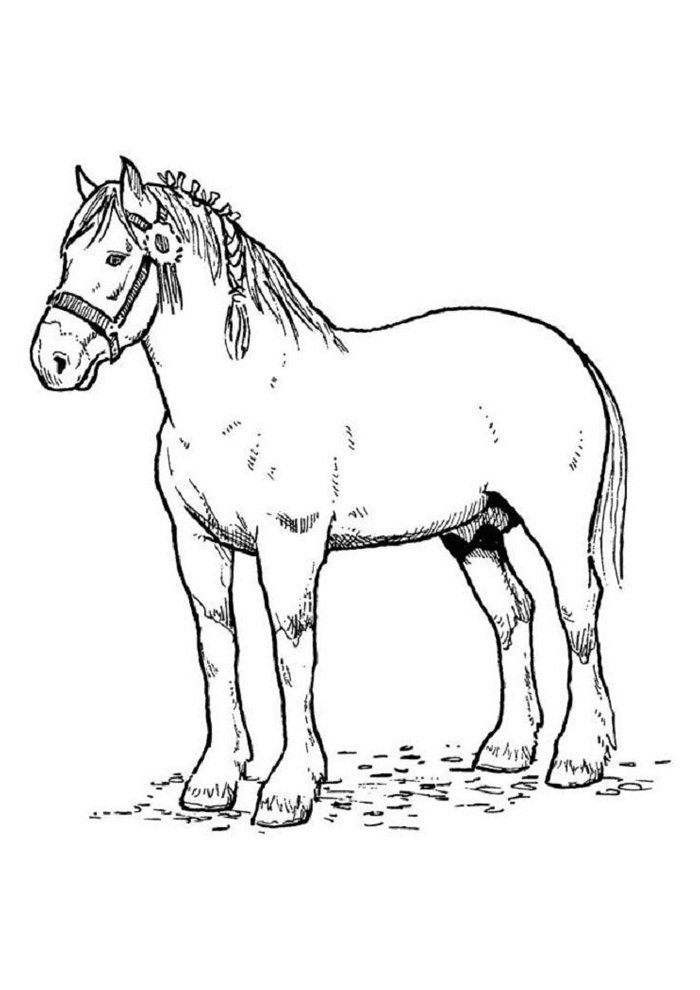 Horse coloring page 65