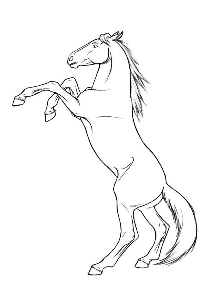 Horse coloring page 67