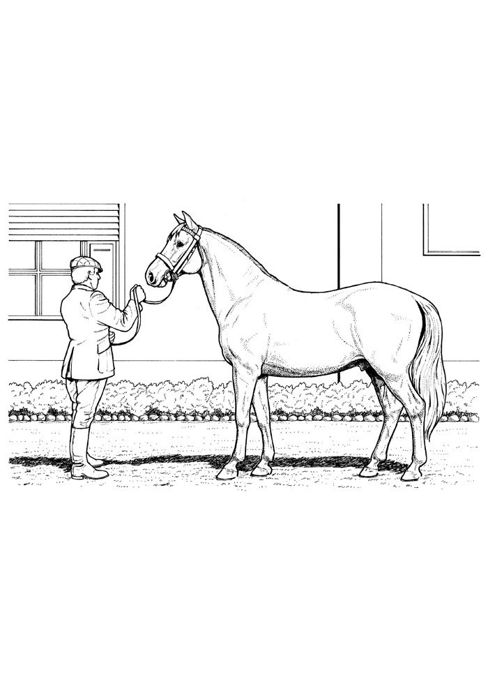 Horse coloring page 73