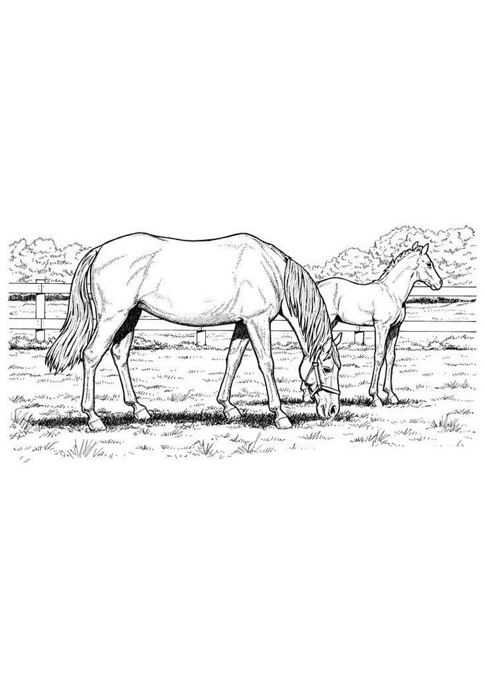Horse coloring page 76
