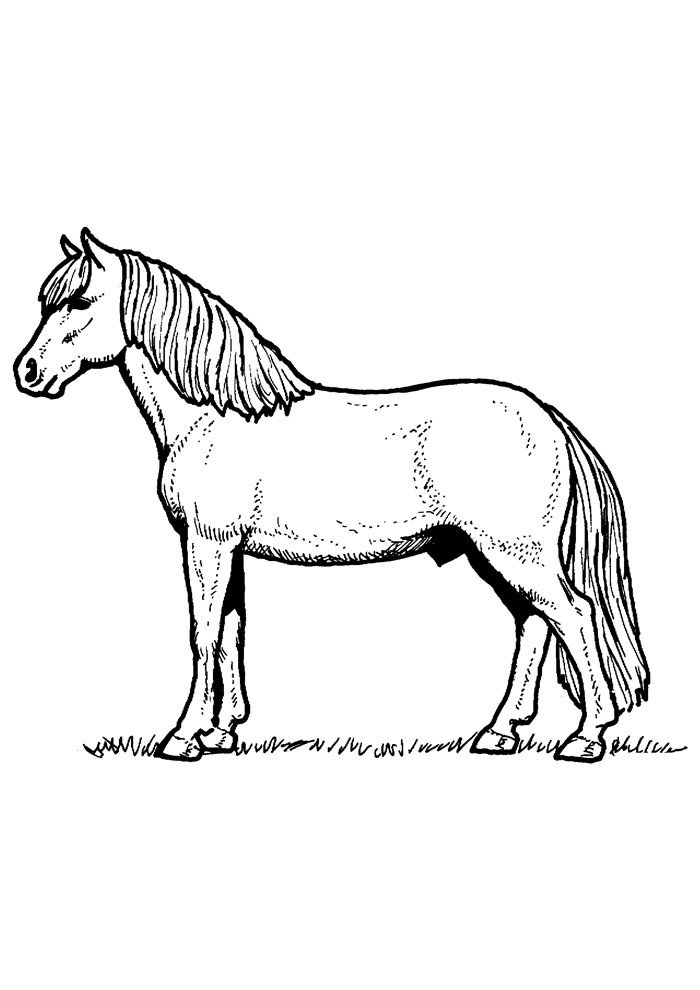 Horse coloring page 77