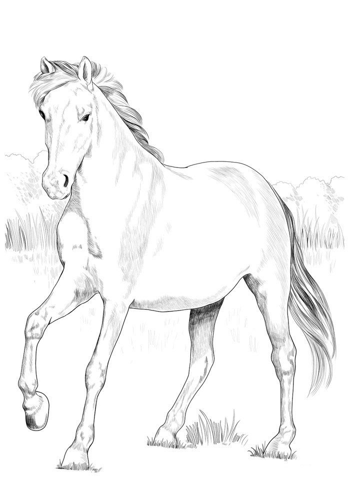 Horse coloring page 78