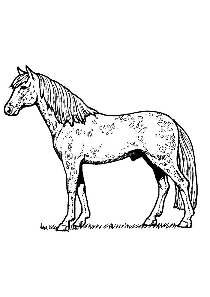 Horse coloring page 79