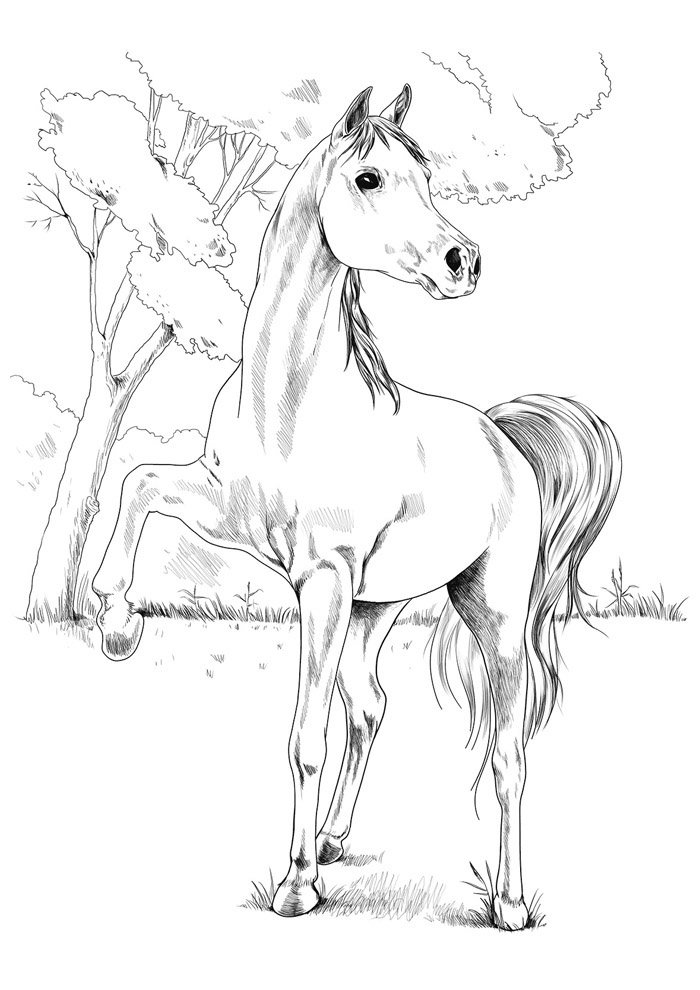 Horse coloring page 80