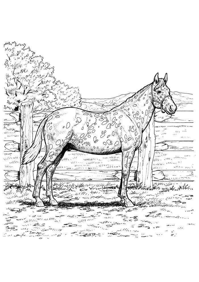 Horse coloring page 81