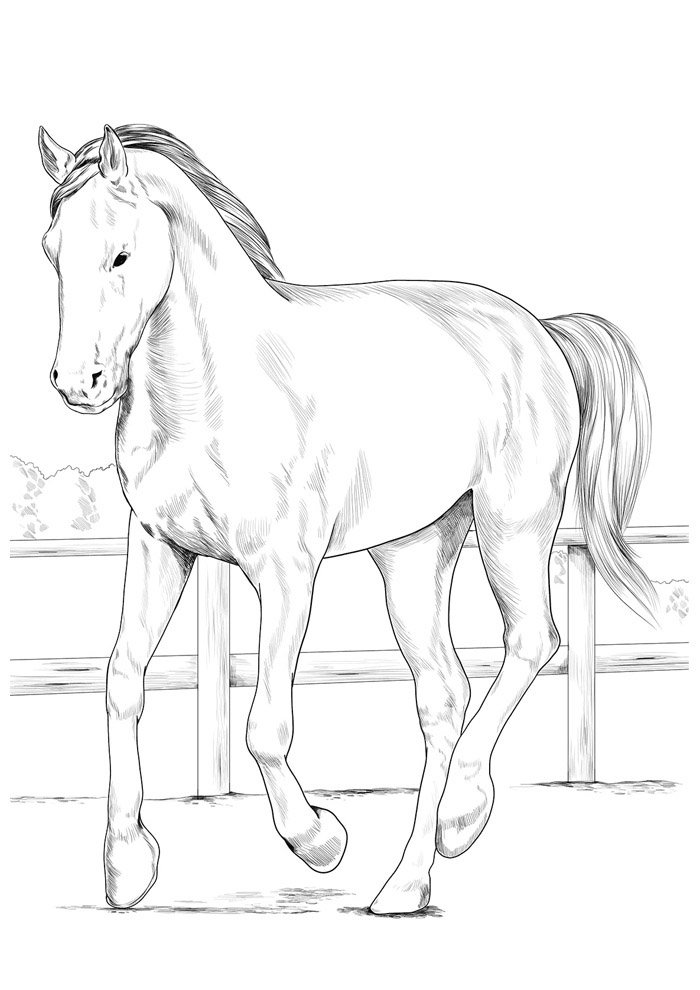 Horse coloring page 83