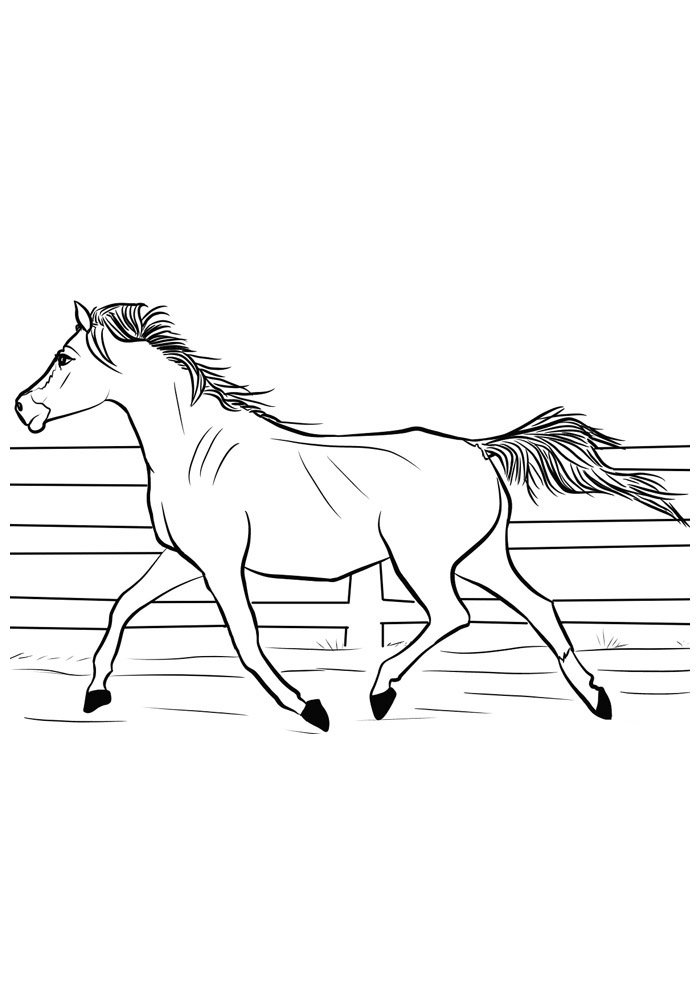 Horse coloring page 84