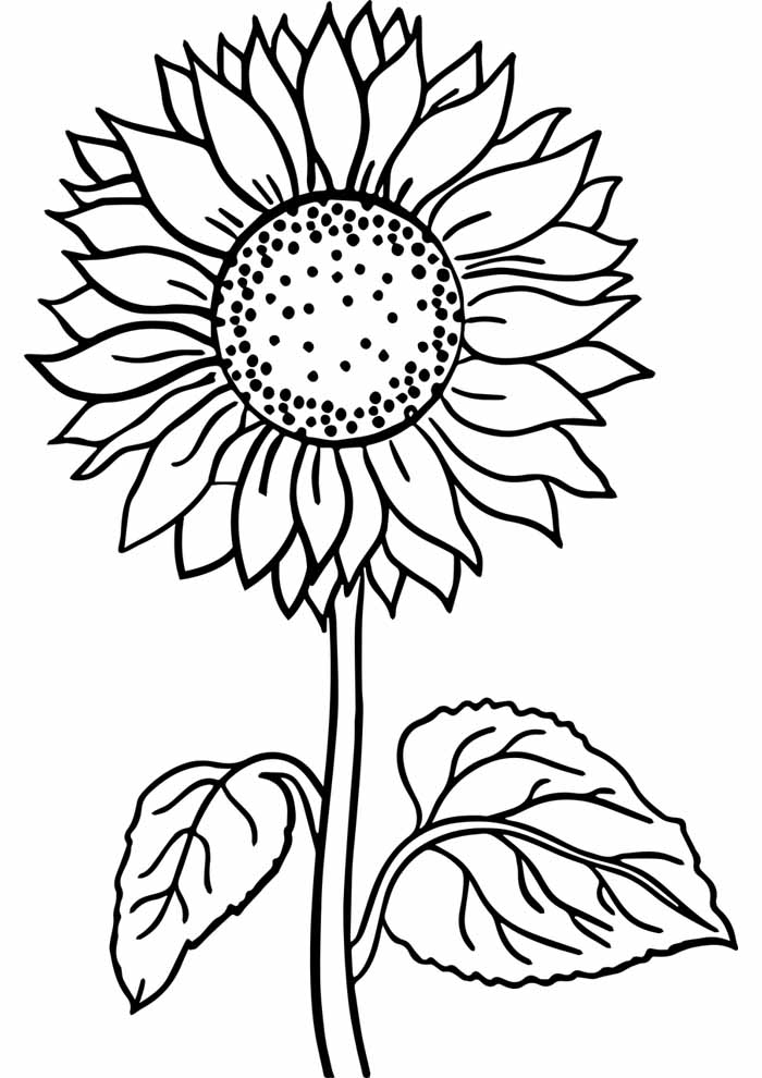 big sunflower coloring page
