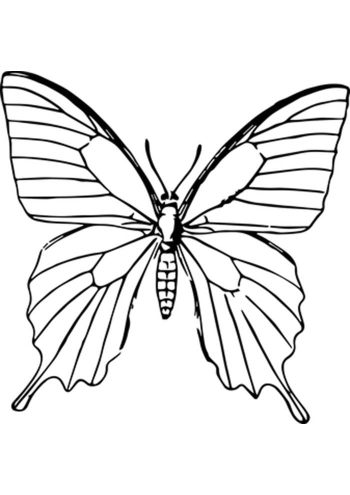 butterfly coloring page for preschool