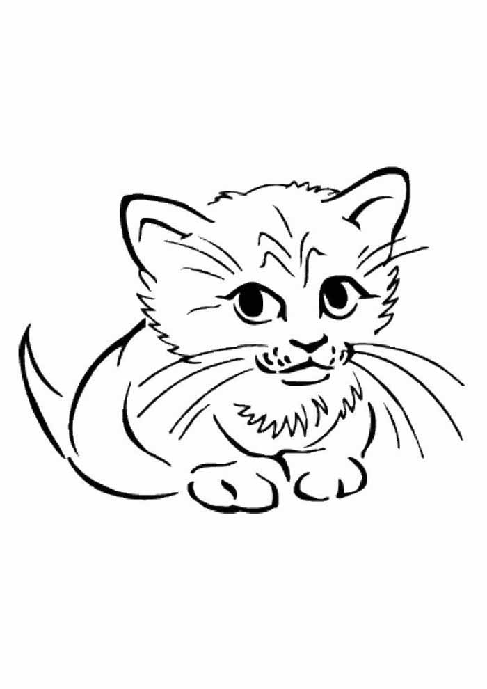 cat coloring page cute