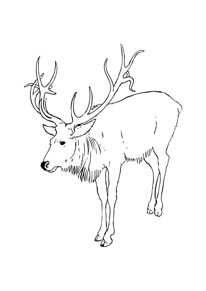christmas coloring page big reindeer