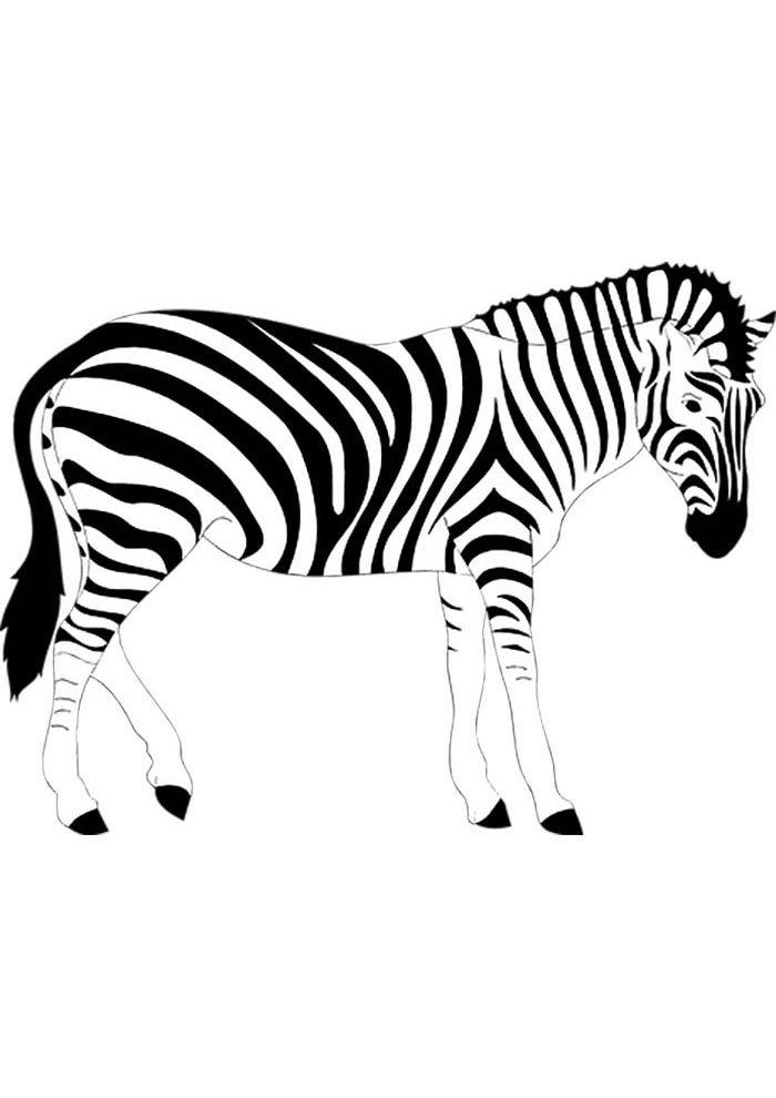 colouring picture of zebra