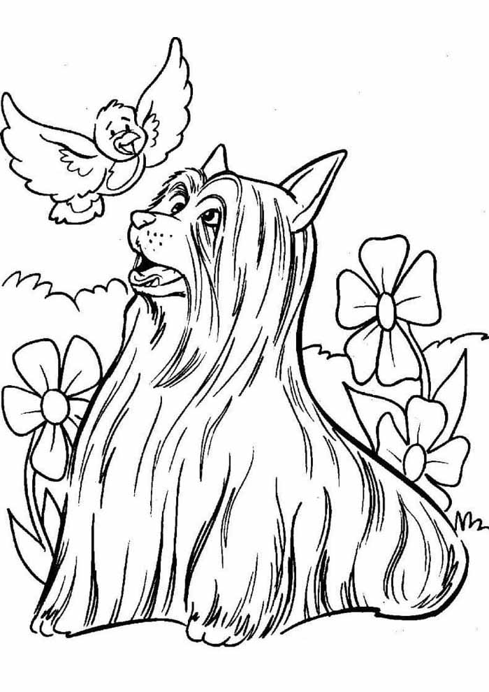 cute dog coloring page with long hair