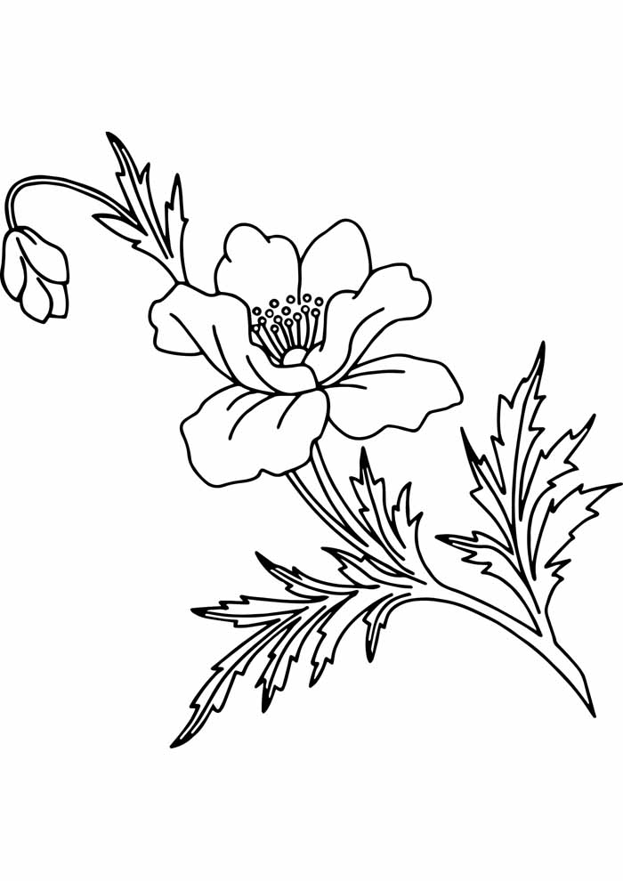 detailed flower coloring page
