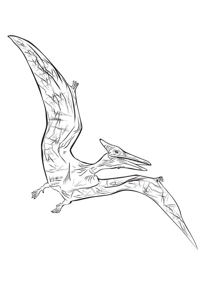 dinosaur coloring page 72