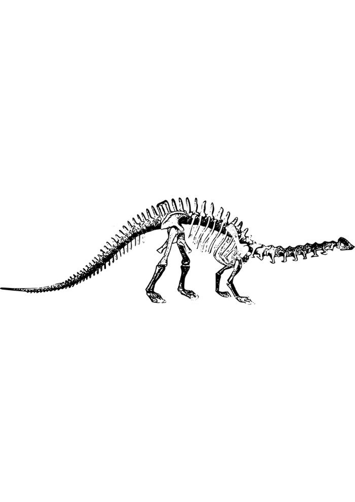 dinosaur skeleton to print