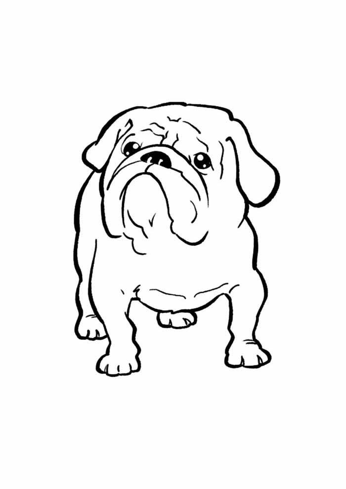 dog coloring page bulldog