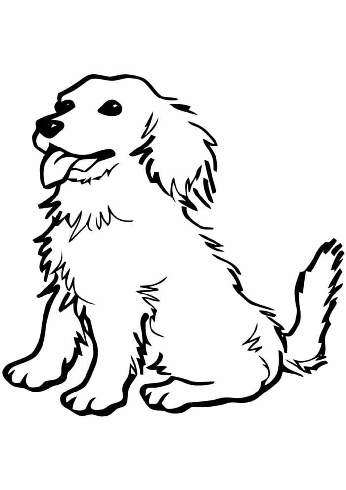 dog coloring page long hair