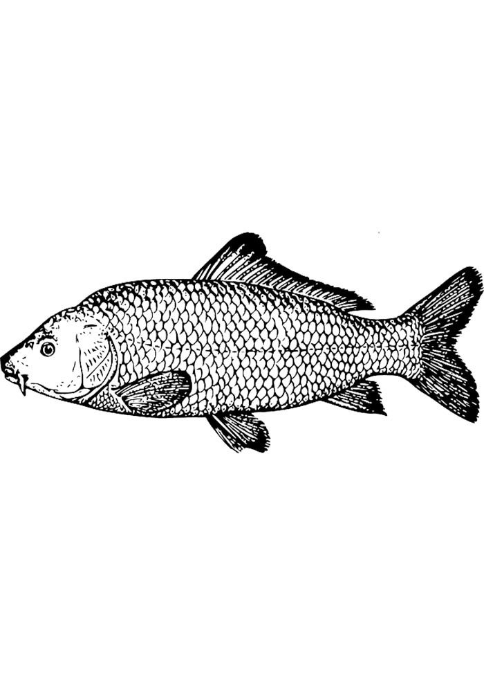 fish coloring sheet