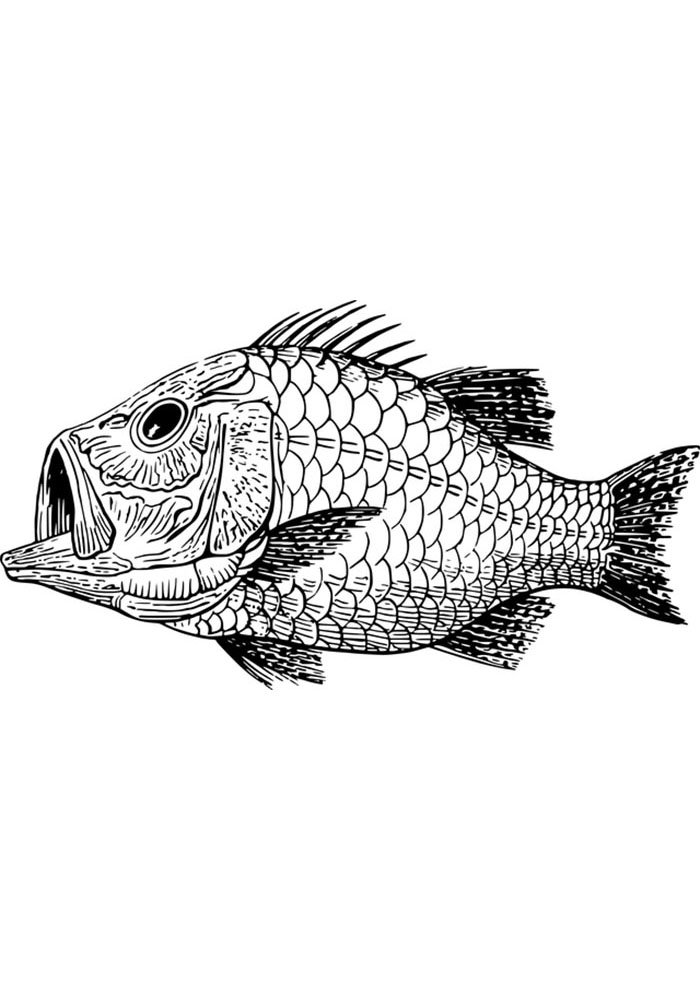fish image coloring for adults