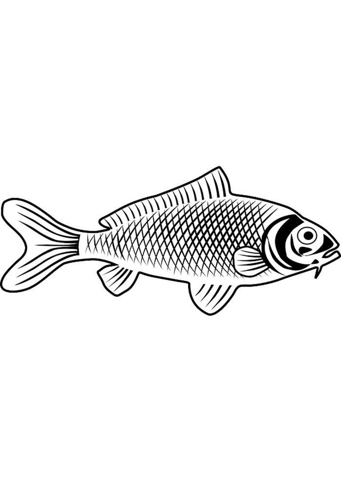 fish picture to color