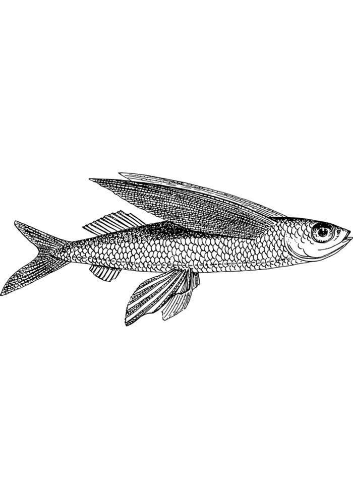 fish printable page