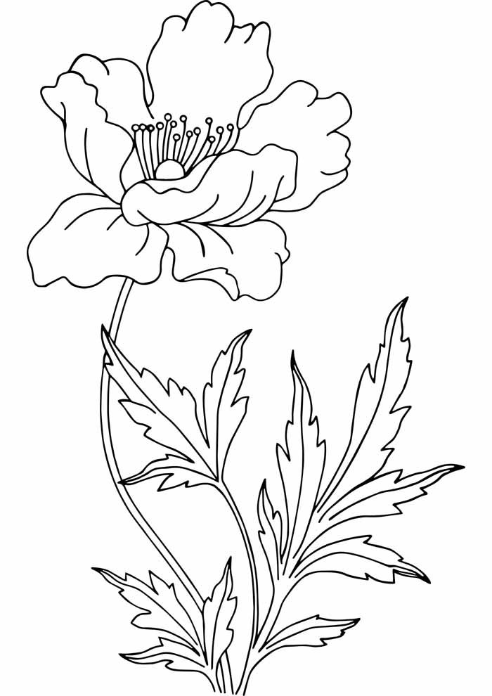 flower coloring page and leaves