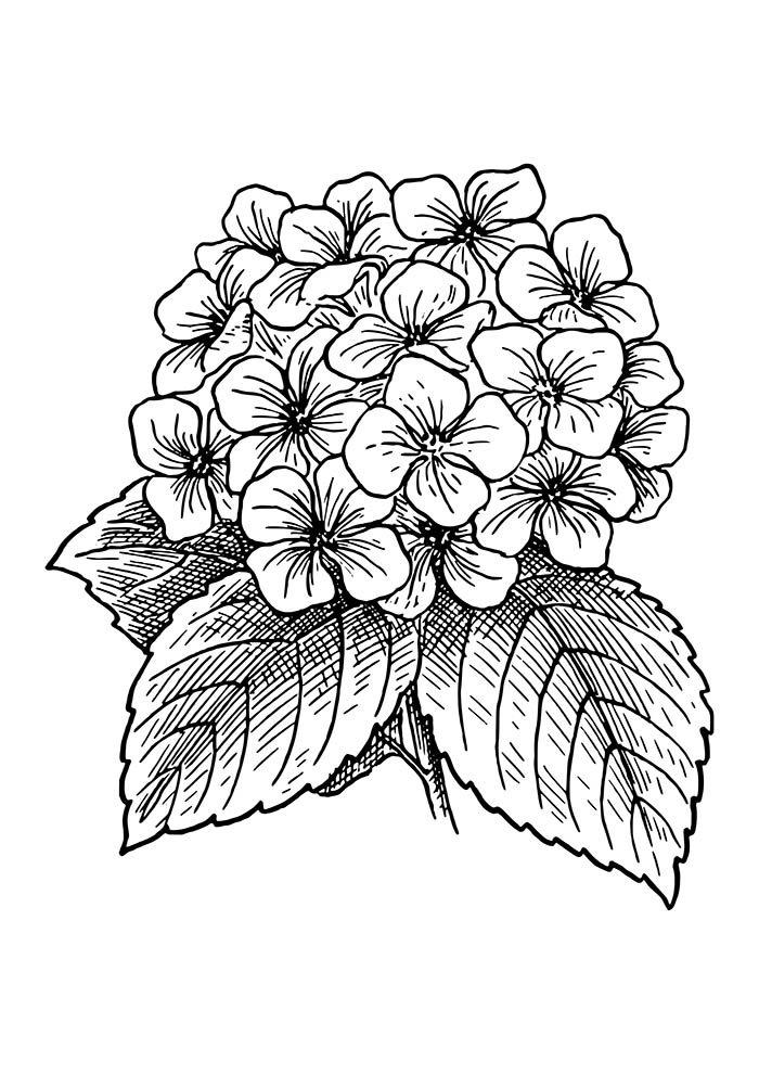 flower coloring page bouquet