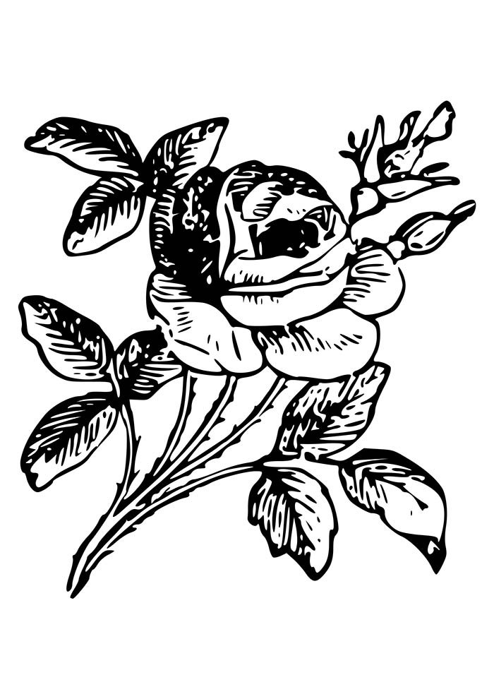 flower coloring page detailed