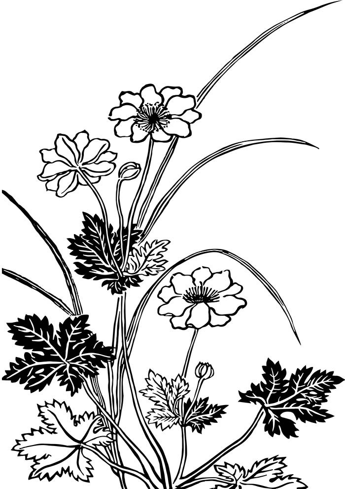 flower coloring page garden