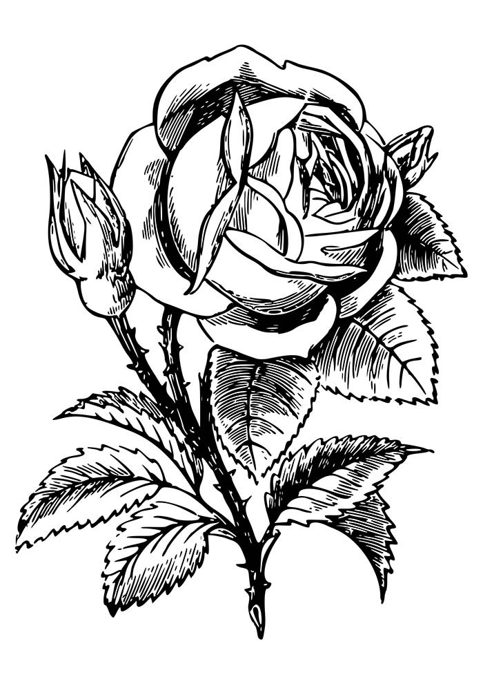 flower coloring page rose