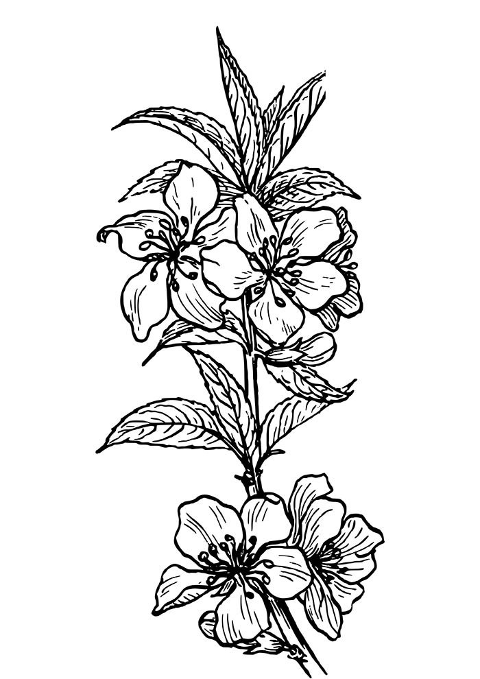 flower coloring page stalks and leaves