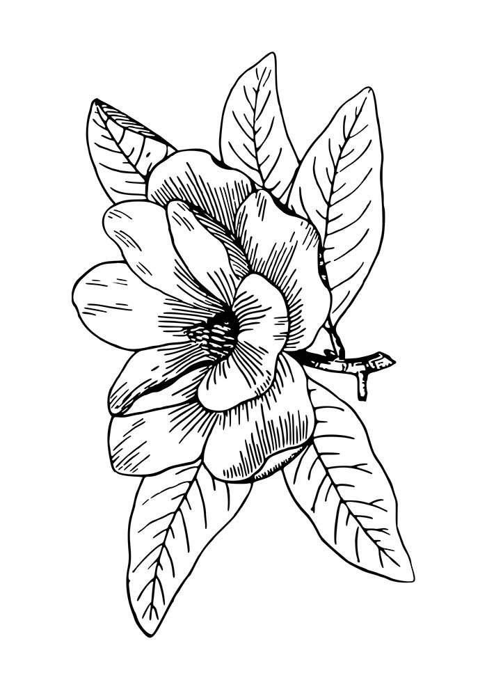 flower coloring page with leaves
