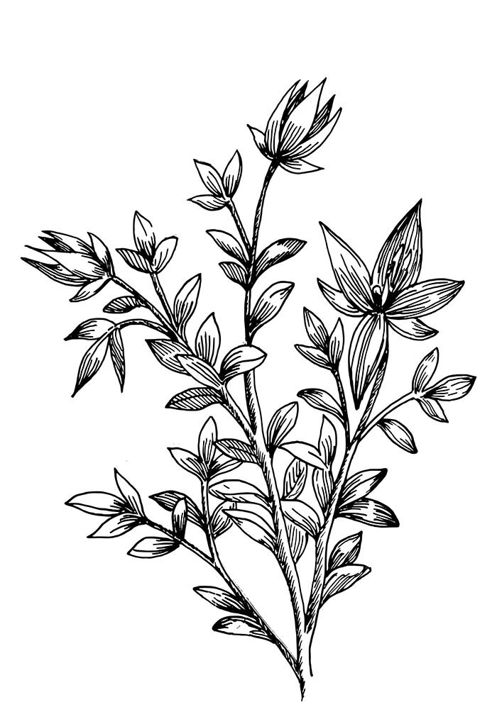 flower coloring pages stalk