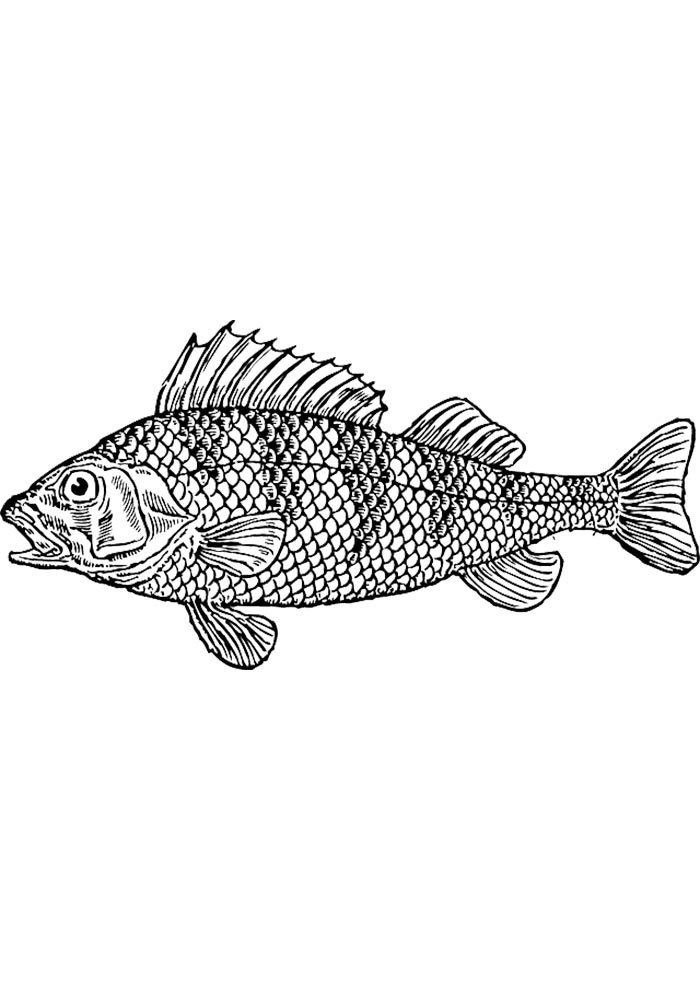 free fish coloring page
