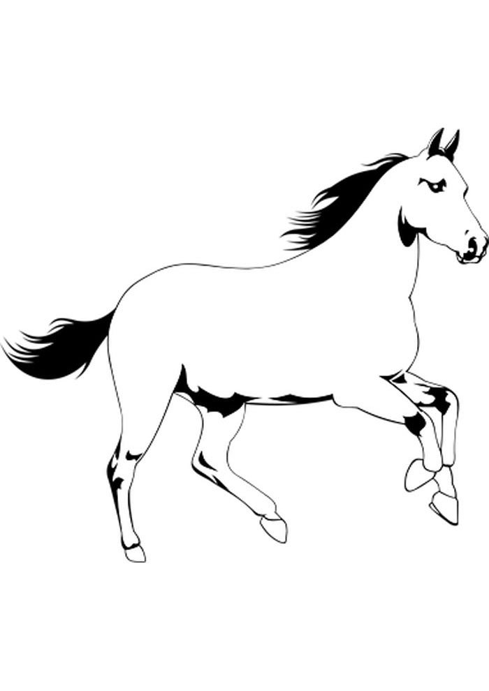 horse picture to color