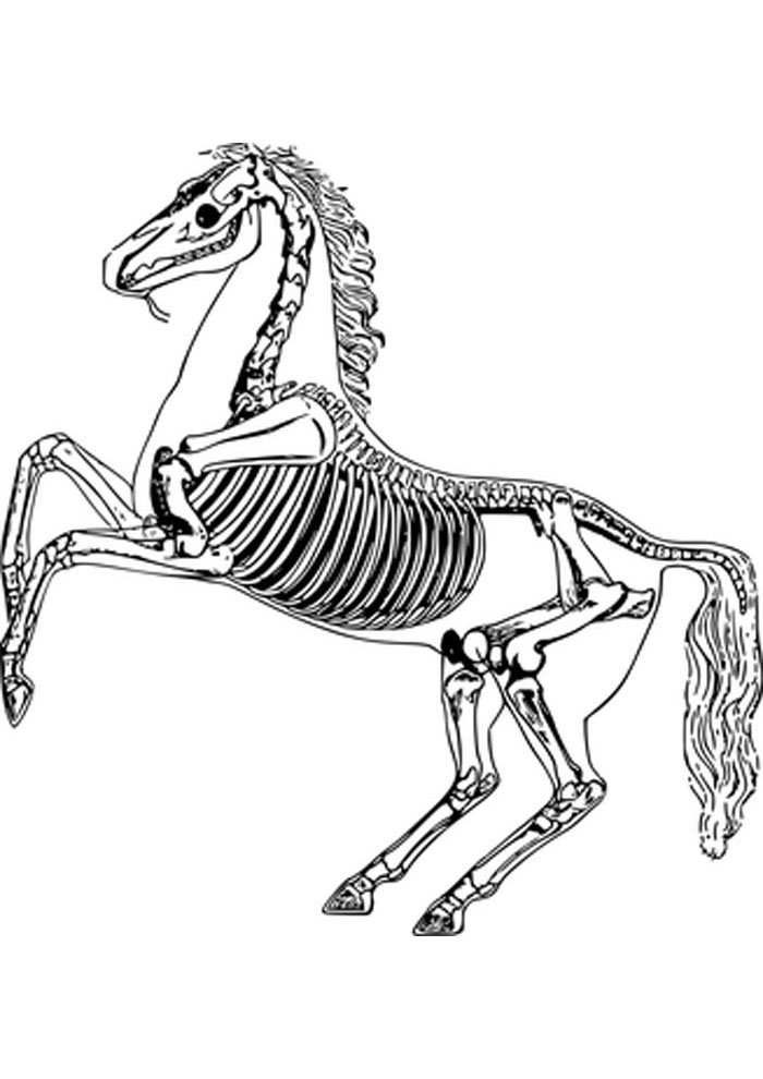 horse skeleton coloring page