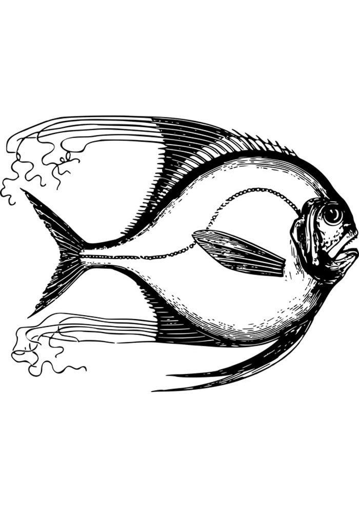 ocean fish coloring page