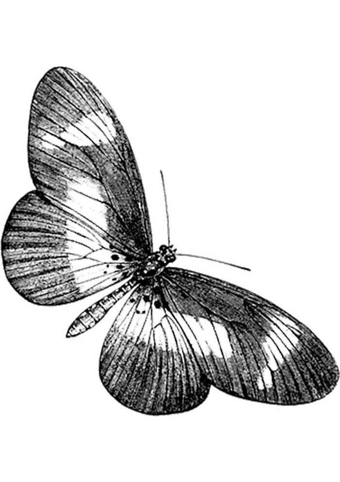 picture of butterfly to color in