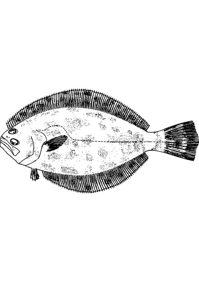 printable fish picture