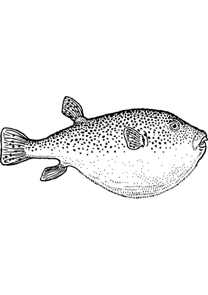 realistic fish coloring page
