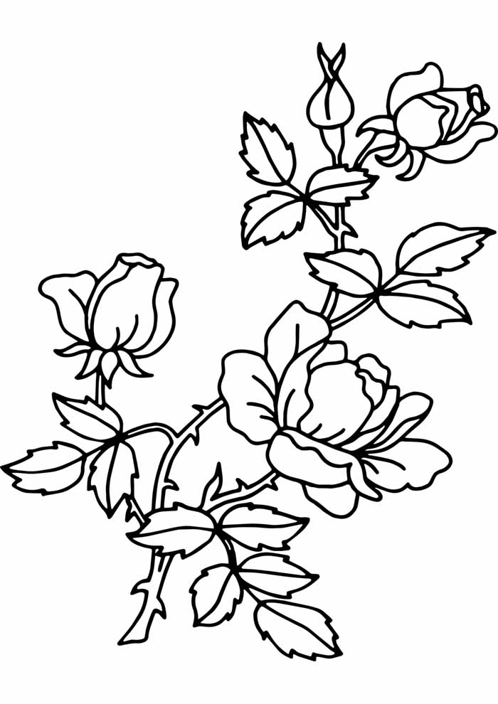 roses flowers coloring page to print