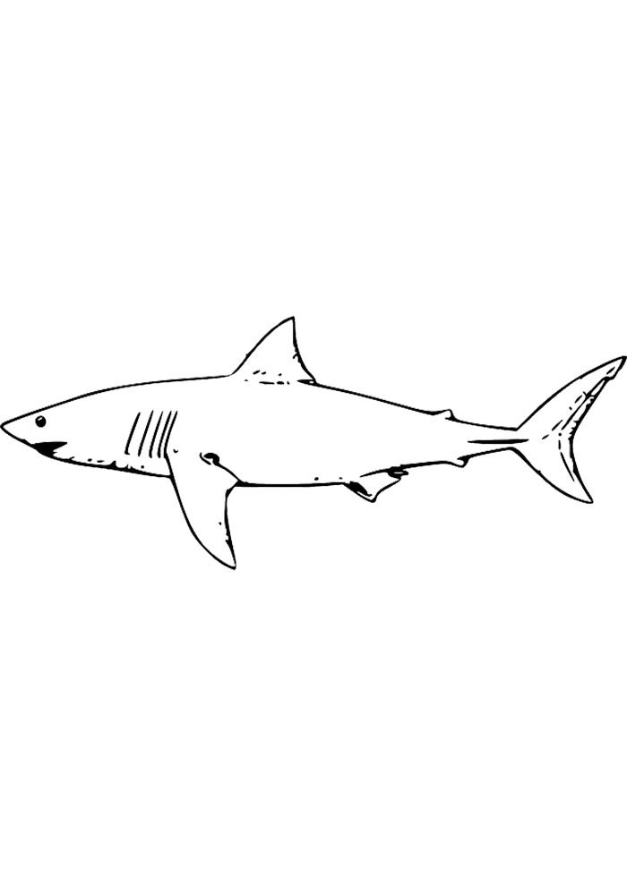 shark colouring image