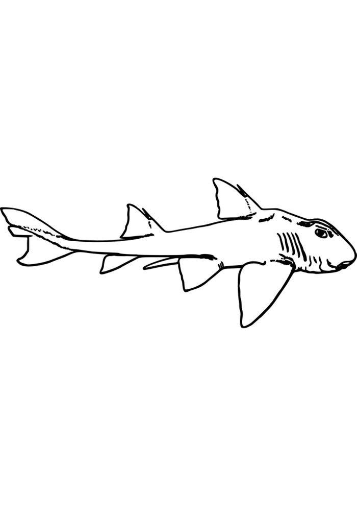 shark printable page